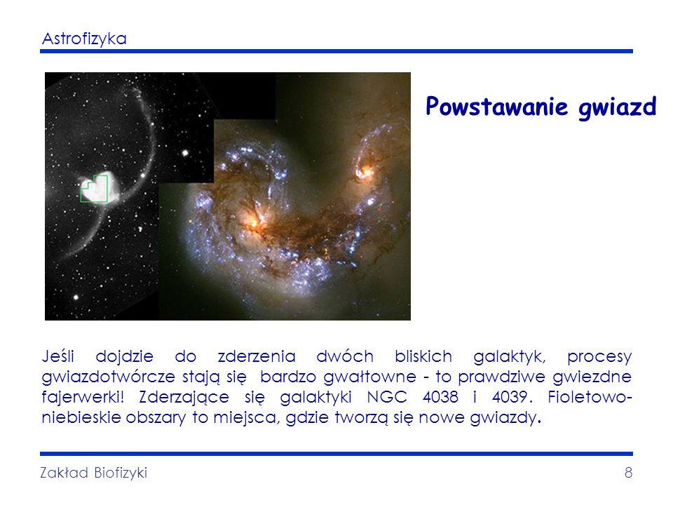 Astrofizyka Zakład Biofizyki8 Powstawanie gwiazd Jeśli dojdzie do zderzenia dwóch bliskich galaktyk, procesy gwiazdotwórcze stają się bardzo gwałtowne