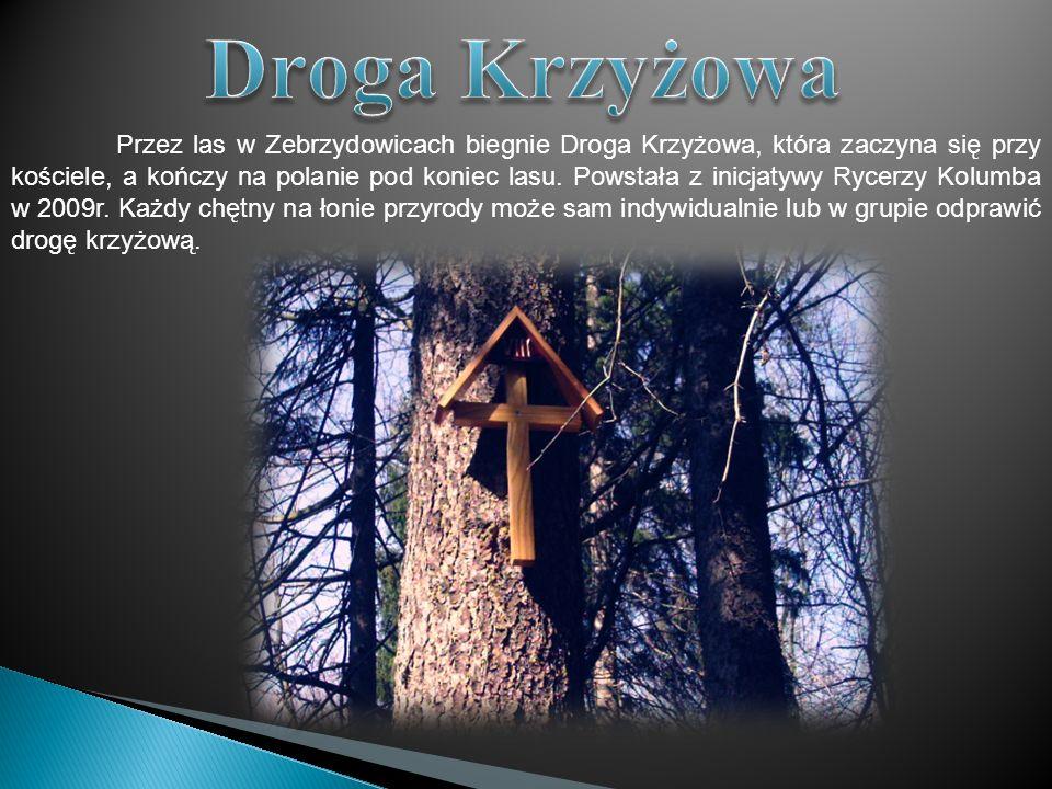 Przez las w Zebrzydowicach biegnie Droga Krzyżowa, która zaczyna się przy kościele, a kończy na polanie pod koniec lasu. Powstała z inicjatywy Rycerzy