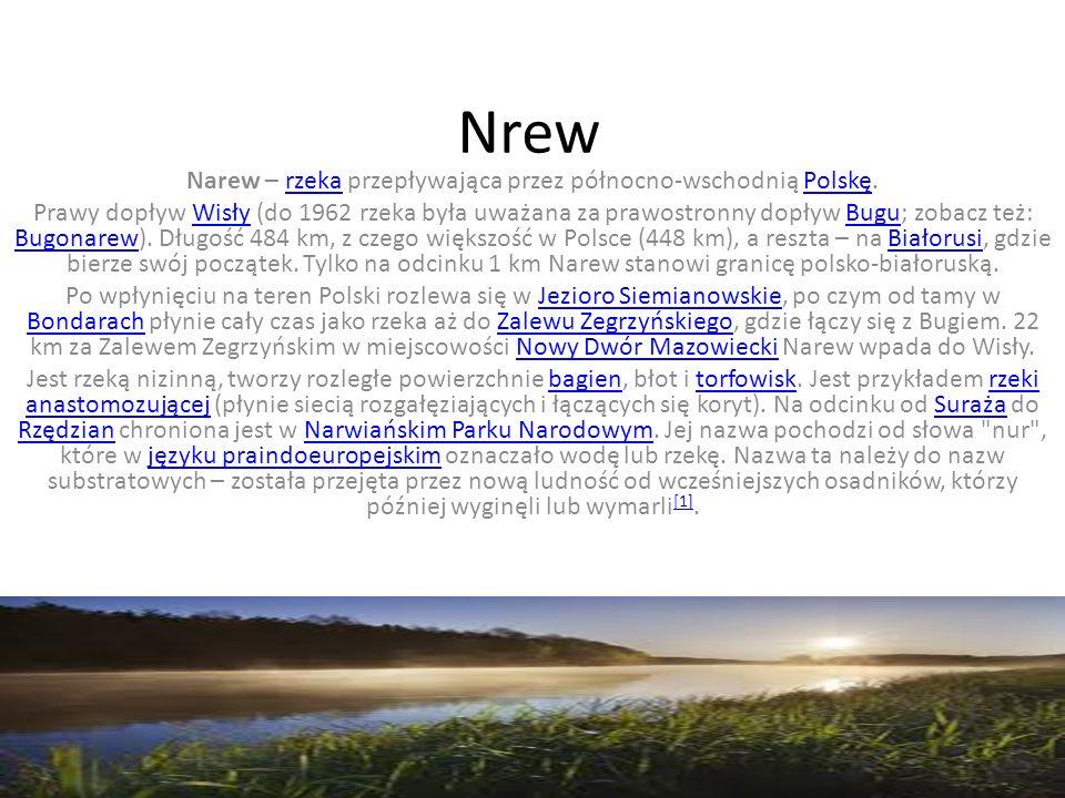 Nrew Narew – rzeka przepływająca przez północno-wschodnią Polskę.rzekaPolskę Prawy dopływ Wisły (do 1962 rzeka była uważana za prawostronny dopływ Bugu; zobacz też: Bugonarew).