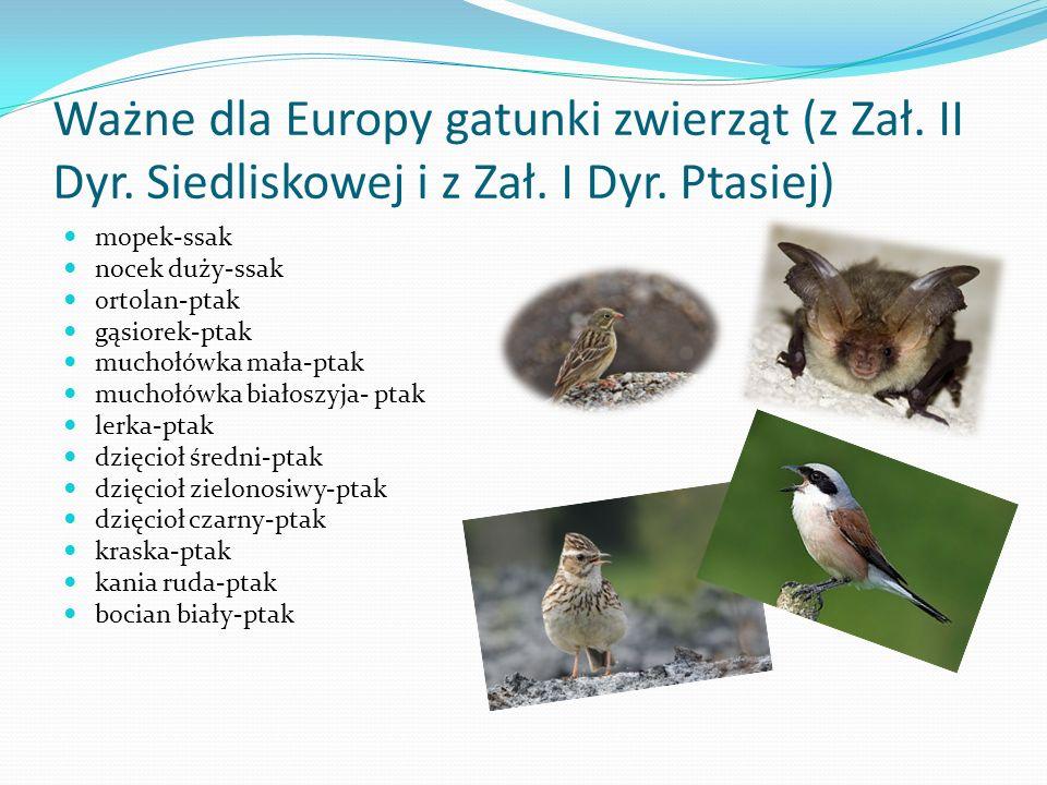 Ważne dla Europy gatunki zwierząt (z Zał.II Dyr. Siedliskowej i z Zał.