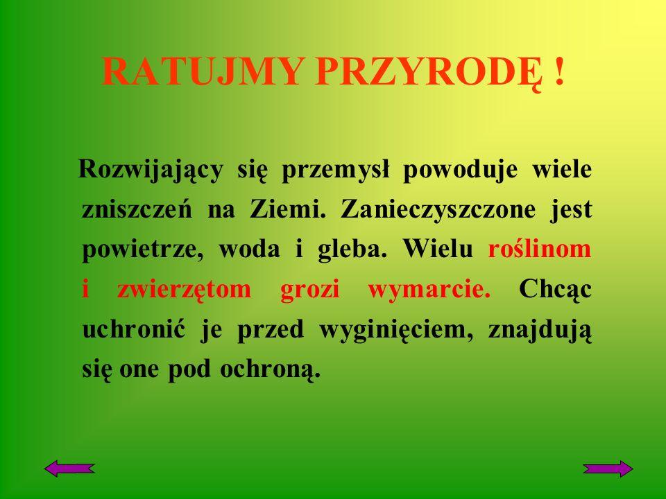 ROŚLINY I ZWIERZĘTA CHRONIONE W POLSCE Autor Grażyna Borowska