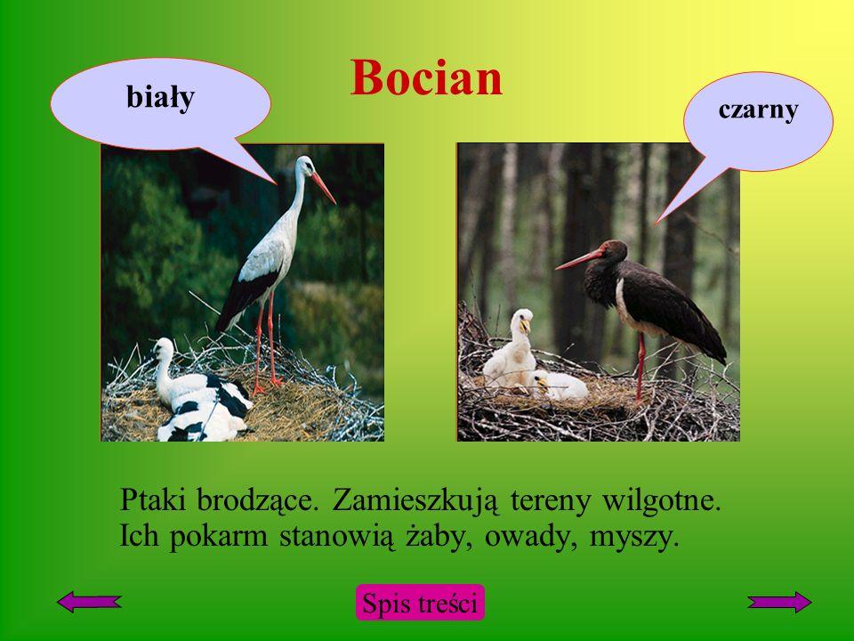 Cis Drzewo lub krzew iglasty. Występuje na nizinach Pomorza, Mazowsza, Śląska i Wyżyny Małopolskiej. Bywa sadzony w parkach. Spis treści