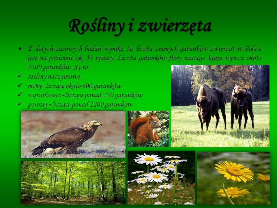 Rośliny i zwierzęta Z dotychczasowych badań wynika że, liczba znanych gatunków zwierząt w Polsce jest na poziomie ok. 33 tysięcy. Liczba gatunków flor