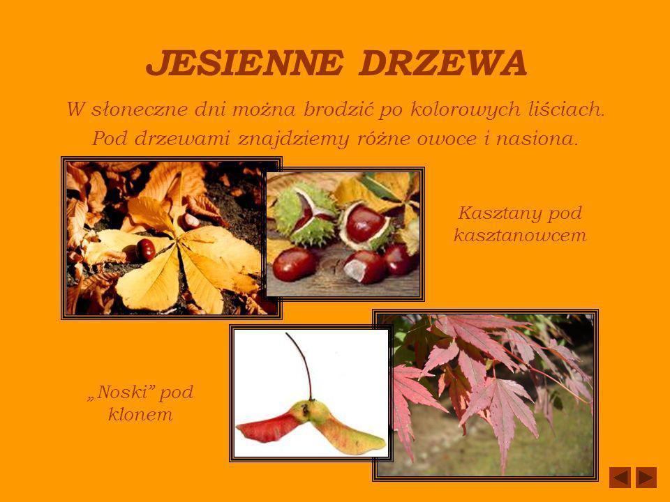 GRZYBY TRUJĄCE Muchomor czerwonyMuchomor sromotnikowy Maślanka wiązkowa Nie niszczmy tych grzybów.