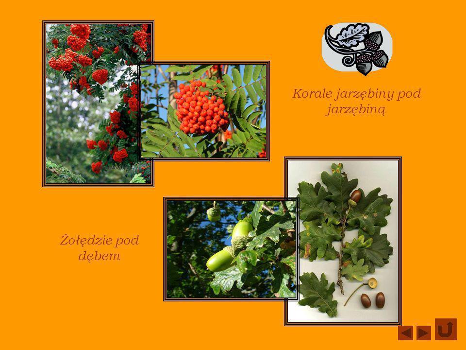 JESIENNE DRZEWA W słoneczne dni można brodzić po kolorowych liściach.