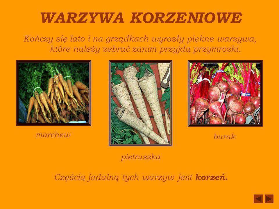 WARZYWA KORZENIOWE Kończy się lato i na grządkach wyrosły piękne warzywa, które należy zebrać zanim przyjdą przymrozki.