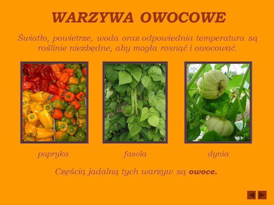 WARZYWA OWOCOWE Światło, powietrze, woda oraz odpowiednia temperatura są roślinie niezbędne, aby mogła rosnąć i owocować.