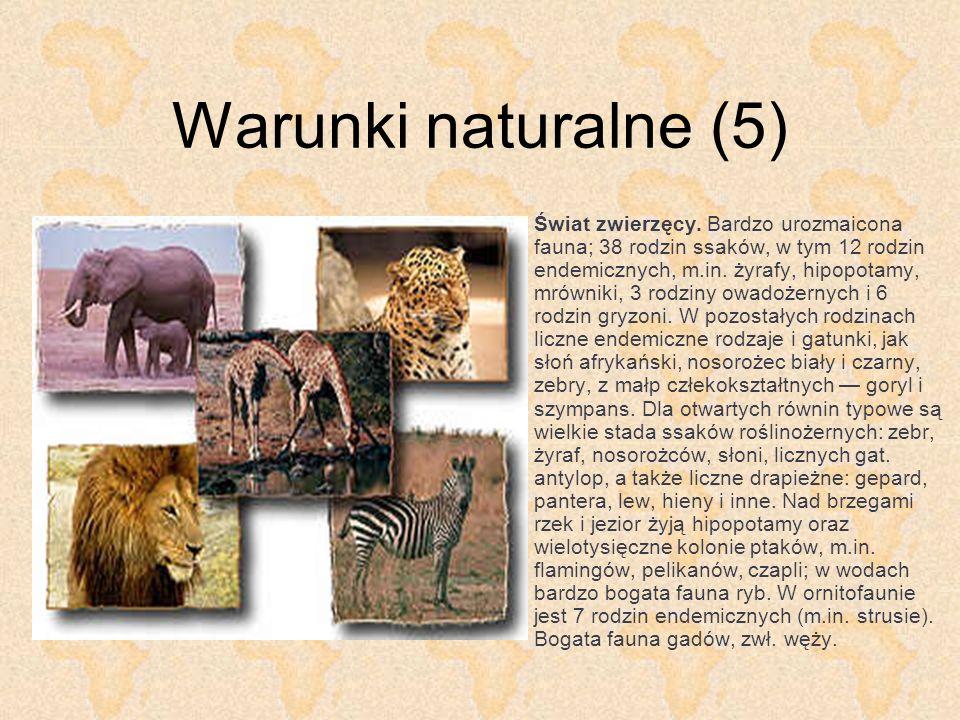 Warunki naturalne (5) Świat zwierzęcy. Bardzo urozmaicona fauna; 38 rodzin ssaków, w tym 12 rodzin endemicznych, m.in. żyrafy, hipopotamy, mrówniki, 3