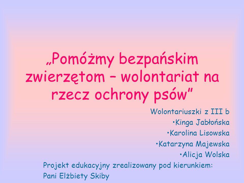 Pomóżmy bezpańskim zwierzętom – wolontariat na rzecz ochrony psów Wolontariuszki z III b Kinga Jabłońska Karolina Lisowska Katarzyna Majewska Alicja W