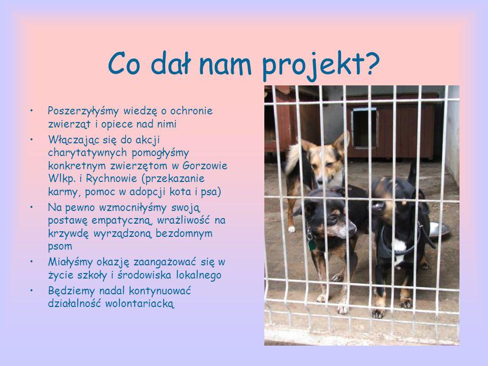 Co dał nam projekt? Poszerzyłyśmy wiedzę o ochronie zwierząt i opiece nad nimi Włączając się do akcji charytatywnych pomogłyśmy konkretnym zwierzętom