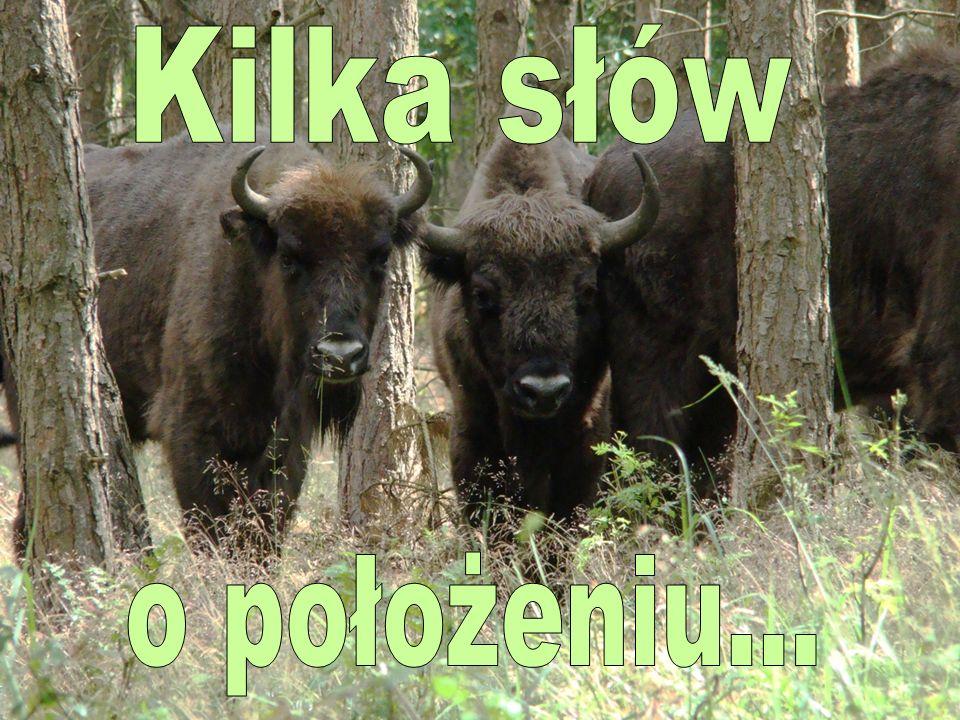 Ten najstarszy w kraju park narodowy, chluba polskiej przyrody, jest położony w centralnej części Puszczy Białowieskiej, w województwie podlaskim przy granicy z Białorusią.