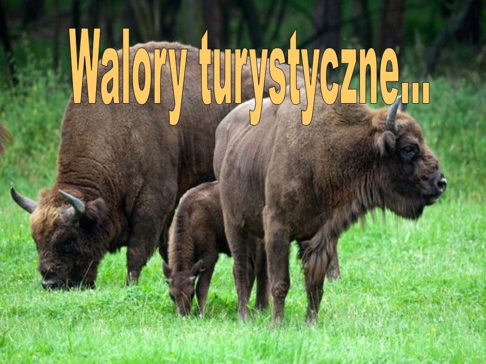 Białowieski Park Narodowy odwiedza co roku ok.140 000 turystów.