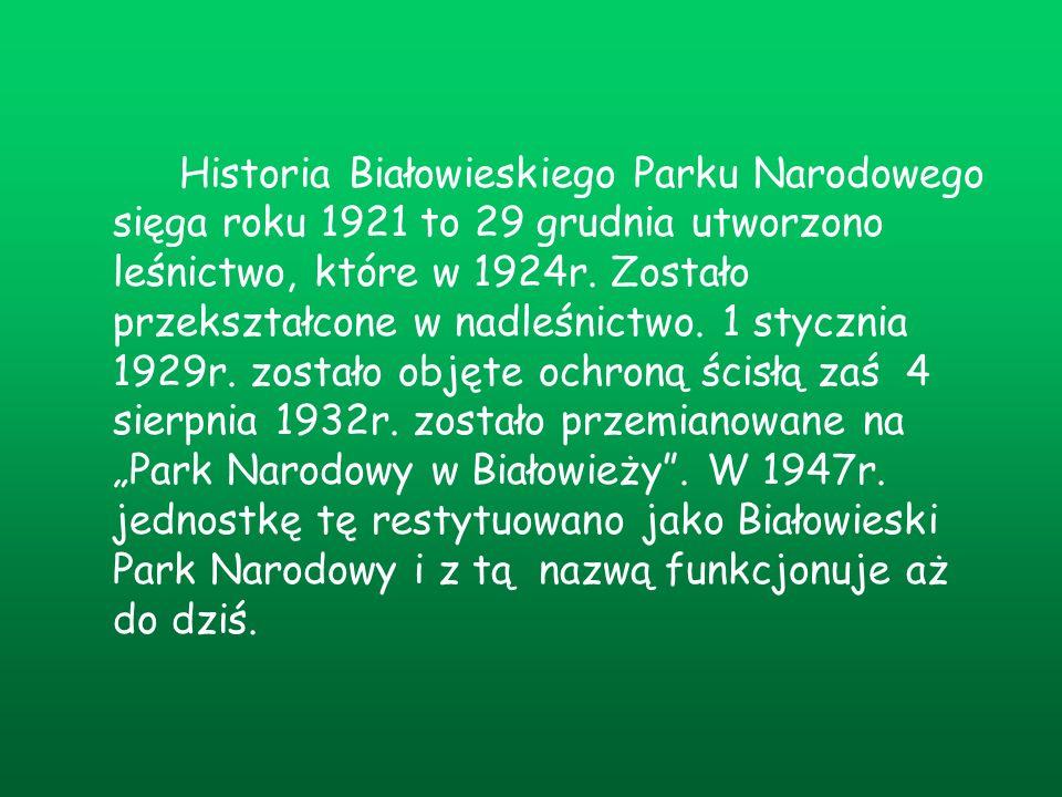 Historia Białowieskiego Parku Narodowego sięga roku 1921 to 29 grudnia utworzono leśnictwo, które w 1924r. Zostało przekształcone w nadleśnictwo. 1 st