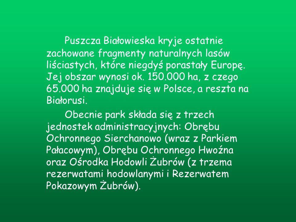 Puszcza Białowieska kryje ostatnie zachowane fragmenty naturalnych lasów liściastych, które niegdyś porastały Europę. Jej obszar wynosi ok. 150.000 ha