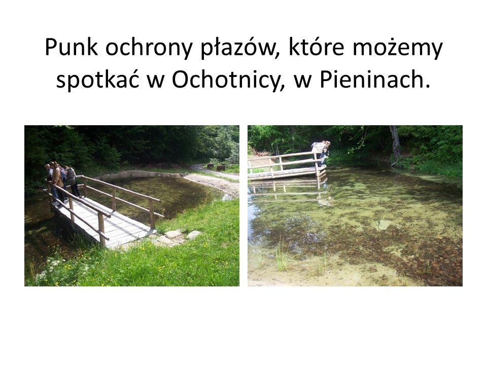 Punk ochrony płazów, które możemy spotkać w Ochotnicy, w Pieninach.