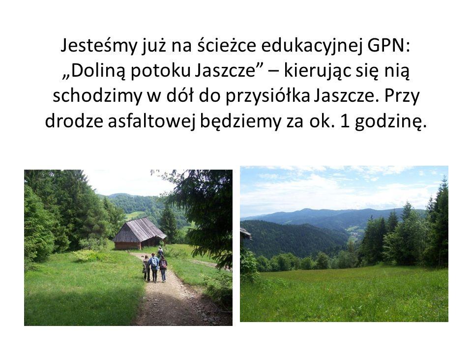 Jesteśmy już na ścieżce edukacyjnej GPN: Doliną potoku Jaszcze – kierując się nią schodzimy w dół do przysiółka Jaszcze. Przy drodze asfaltowej będzie