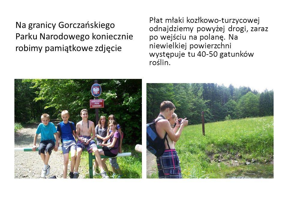 Na granicy Gorczańskiego Parku Narodowego koniecznie robimy pamiątkowe zdjęcie Płat młaki kozłkowo-turzycowej odnajdziemy powyżej drogi, zaraz po wejś