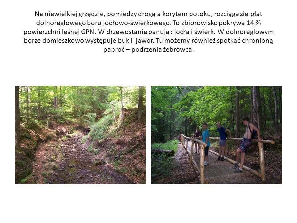Na niewielkiej grzędzie, pomiędzy drogą a korytem potoku, rozciąga się płat dolnoreglowego boru jodłowo-świerkowego. To zbiorowisko pokrywa 14 % powie
