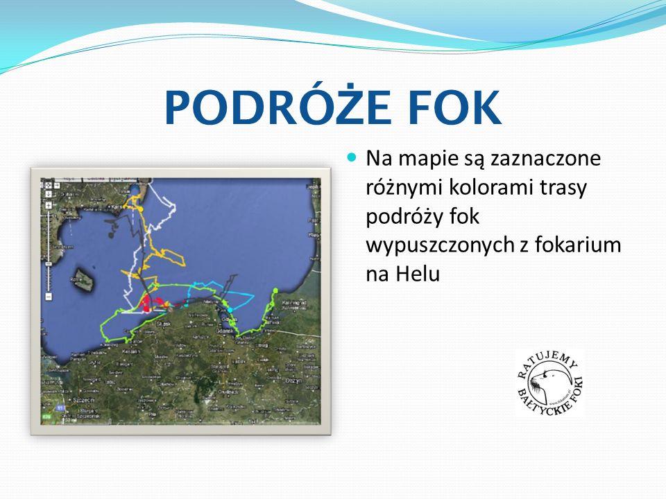 PODRÓ Ż E FOK Na mapie są zaznaczone różnymi kolorami trasy podróży fok wypuszczonych z fokarium na Helu
