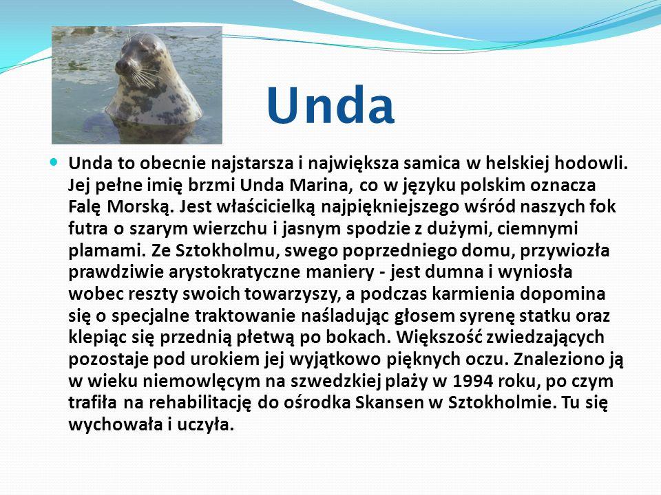 Unda Unda to obecnie najstarsza i największa samica w helskiej hodowli. Jej pełne imię brzmi Unda Marina, co w języku polskim oznacza Falę Morską. Jes