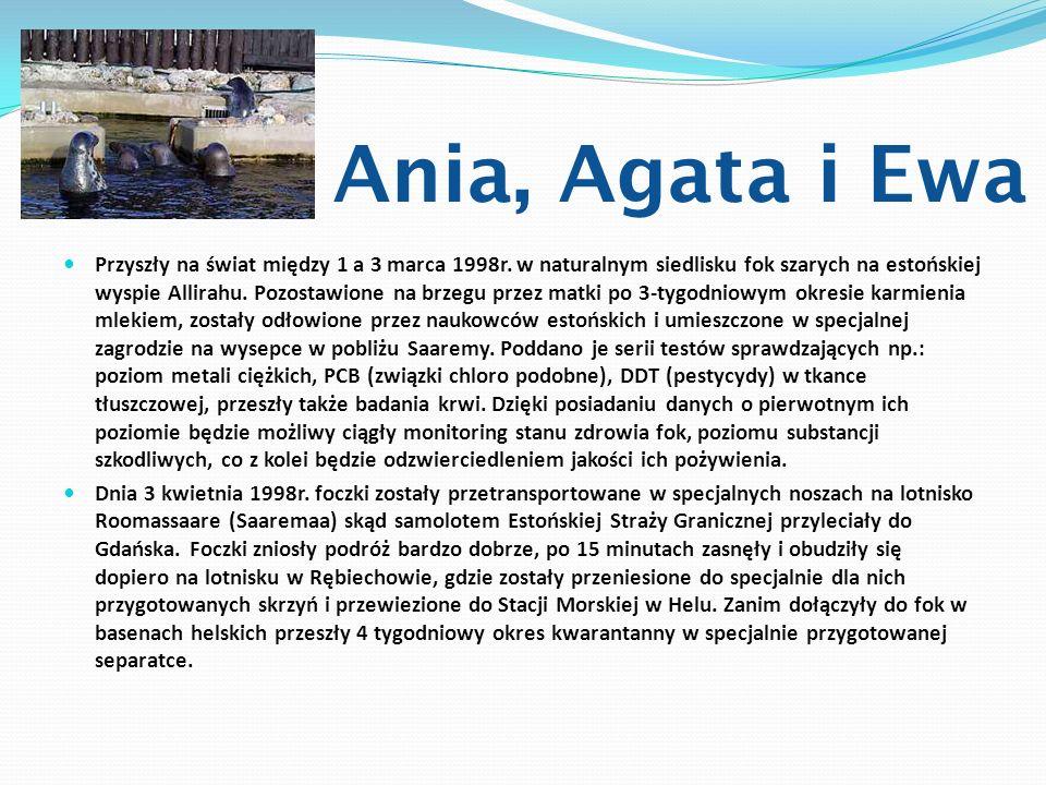 Ania, Agata i Ewa Przyszły na świat między 1 a 3 marca 1998r. w naturalnym siedlisku fok szarych na estońskiej wyspie Allirahu. Pozostawione na brzegu
