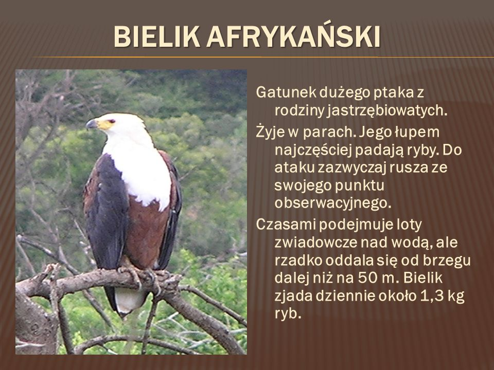 Gatunek dużego ptaka z rodziny jastrzębiowatych.Żyje w parach.