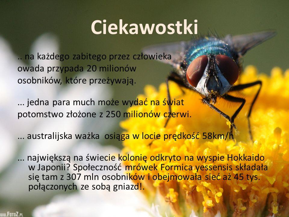 Ciekawostki.. na każdego zabitego przez człowieka owada przypada 20 milionów osobników, które przeżywają.... jedna para much może wydać na świat potom