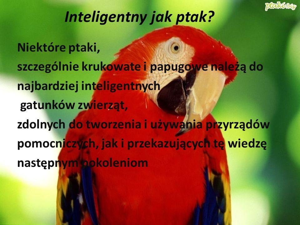 Niektóre ptaki, szczególnie krukowate i papugowe należą do najbardziej inteligentnych gatunków zwierząt, zdolnych do tworzenia i używania przyrządów p