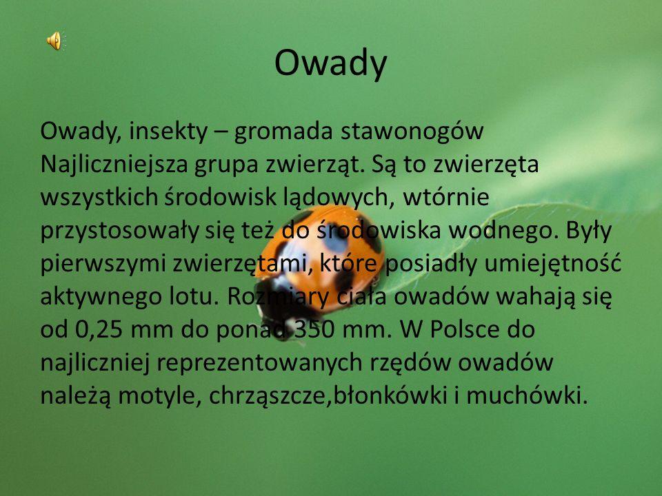 Owady Owady, insekty – gromada stawonogów Najliczniejsza grupa zwierząt. Są to zwierzęta wszystkich środowisk lądowych, wtórnie przystosowały się też