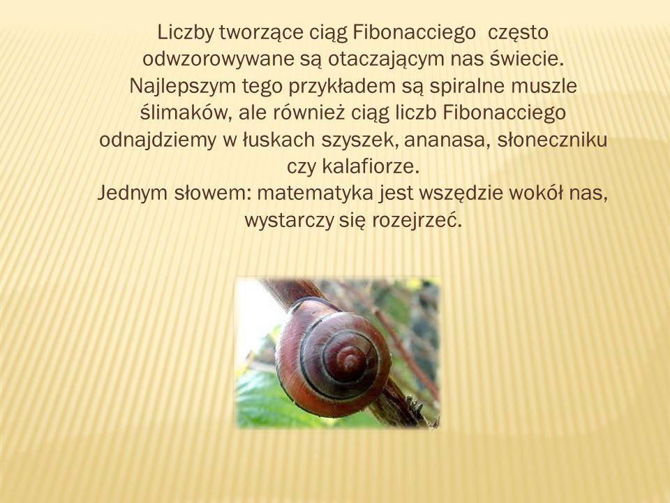 Liczby tworzące ciąg Fibonacciego często odwzorowywane są otaczającym nas świecie. Najlepszym tego przykładem są spiralne muszle ślimaków, ale również
