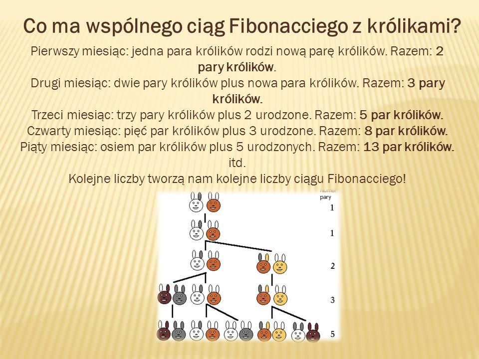 Co ma wspólnego ciąg Fibonacciego z królikami? Pierwszy miesiąc: jedna para królików rodzi nową parę królików. Razem: 2 pary królików. Drugi miesiąc: