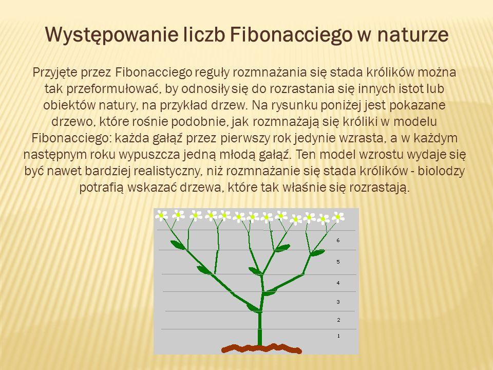 Występowanie liczb Fibonacciego w naturze Przyjęte przez Fibonacciego reguły rozmnażania się stada królików można tak przeformułować, by odnosiły się