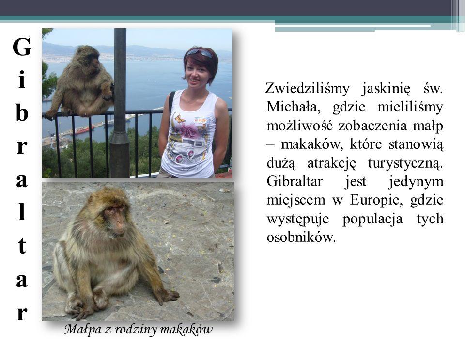 Małpa z rodziny makaków Zwiedziliśmy jaskinię św. Michała, gdzie mieliliśmy możliwość zobaczenia małp – makaków, które stanowią dużą atrakcję turystyc