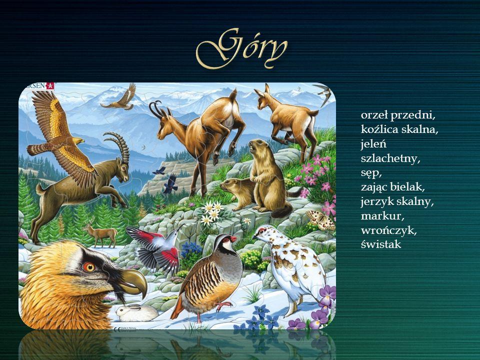 orzeł przedni, koźlica skalna, jeleń szlachetny, sęp, zając bielak, jerzyk skalny, markur, wrończyk, świstak