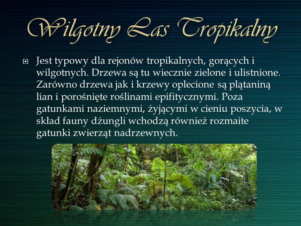 Jest typowy dla rejonów tropikalnych, gorących i wilgotnych. Drzewa są tu wiecznie zielone i ulistnione. Zarówno drzewa jak i krzewy oplecione są pląt
