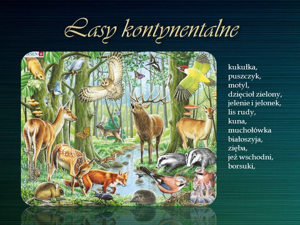 kukułka, puszczyk, motyl, dzięcioł zielony, jelenie i jelonek, lis rudy, kuna, muchołówka białoszyja, zięba, jeż wschodni, borsuki,