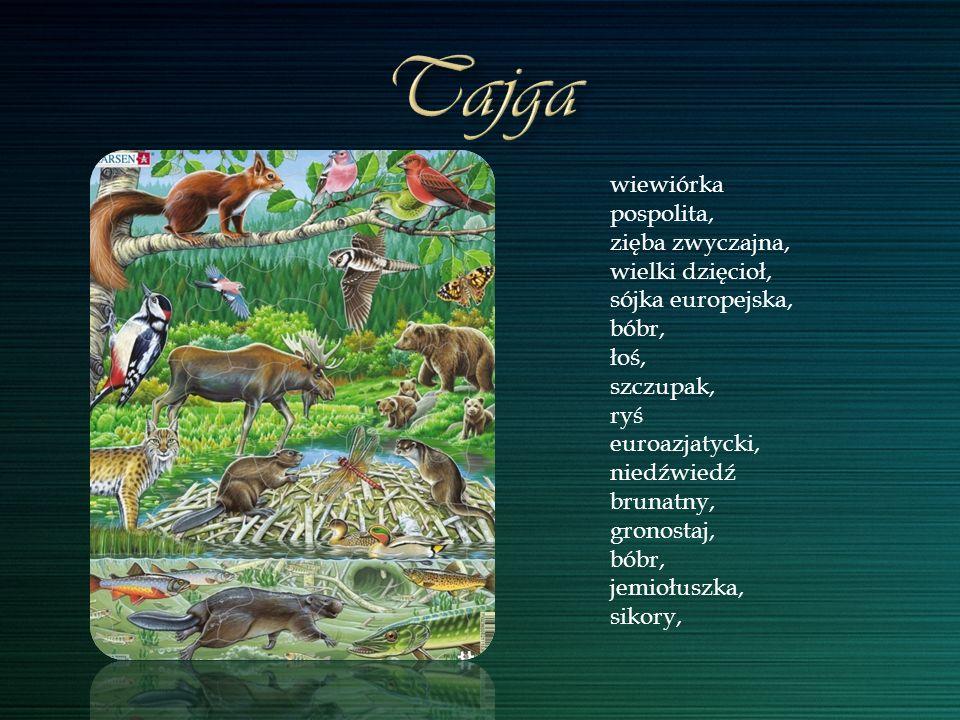 wiewiórka pospolita, zięba zwyczajna, wielki dzięcioł, sójka europejska, bóbr, łoś, szczupak, ryś euroazjatycki, niedźwiedź brunatny, gronostaj, bóbr,