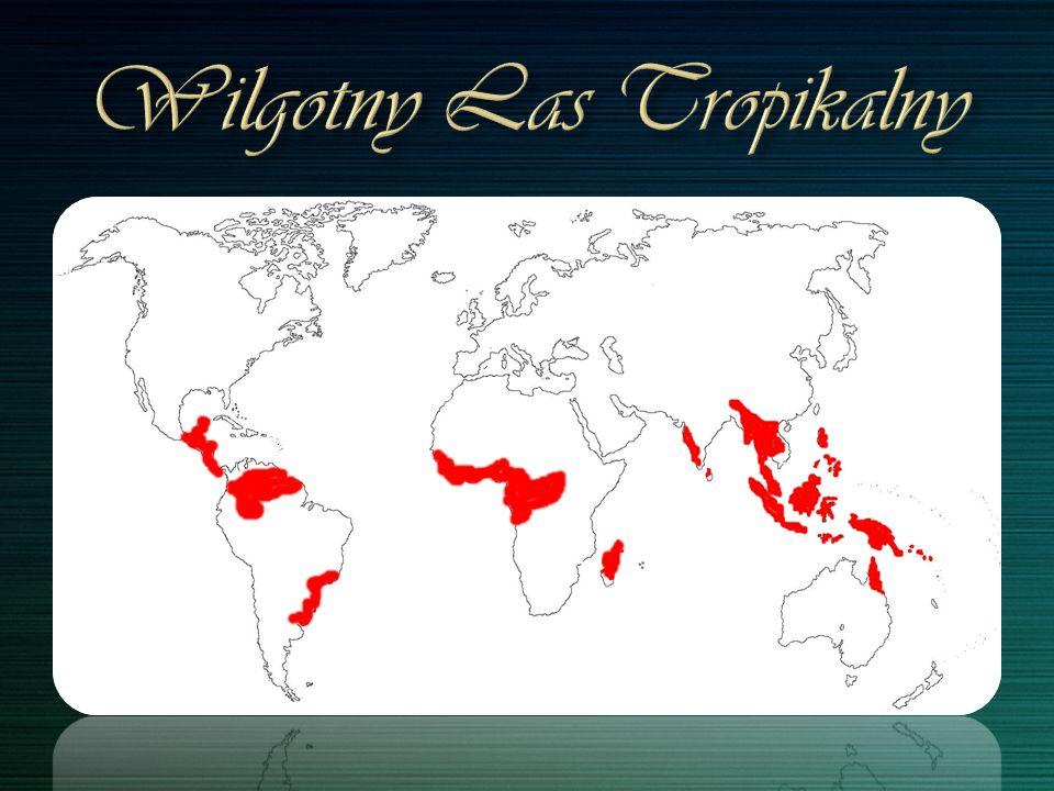 ara żółtoskrzydła, leniwiec, wyjec, tukan, koliber, jeleń amazoński, motyl dzienny morpho, boa psiogłowy, mrówkojad, jaguar, żaba.