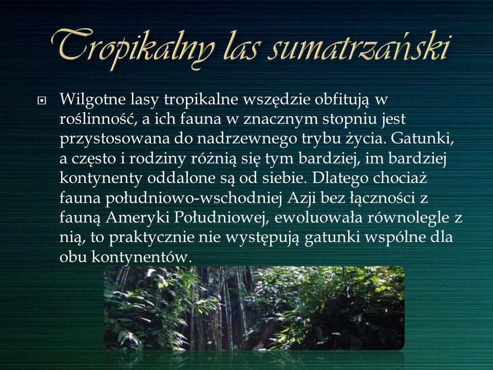 Wilgotne lasy tropikalne wszędzie obfitują w roślinność, a ich fauna w znacznym stopniu jest przystosowana do nadrzewnego trybu życia. Gatunki, a częs