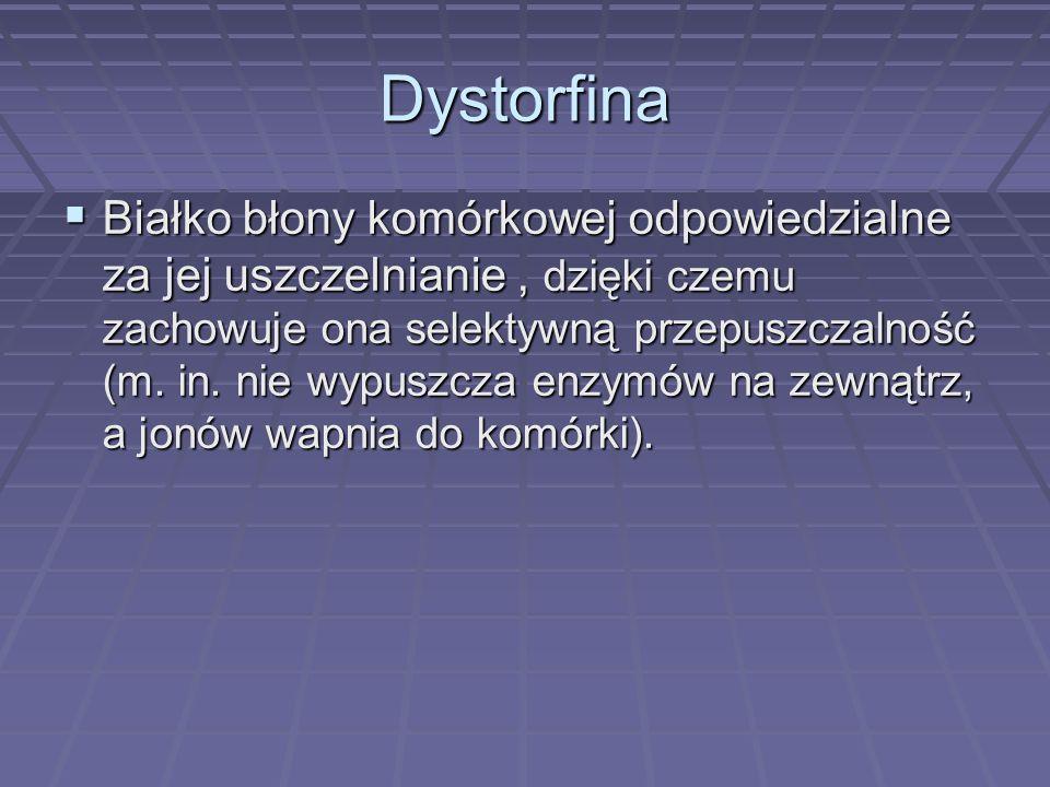 BRAK DYSTROFINY W DMD Do komórki wnikają bez przeszkód jony wapnia co powoduje martwicę i rozrost tkanki włóknistej w miejscu tkanki mięśniowej.