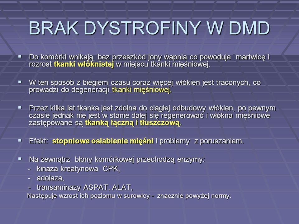 BRAK DYSTROFINY W DMD Do komórki wnikają bez przeszkód jony wapnia co powoduje martwicę i rozrost tkanki włóknistej w miejscu tkanki mięśniowej. Do ko