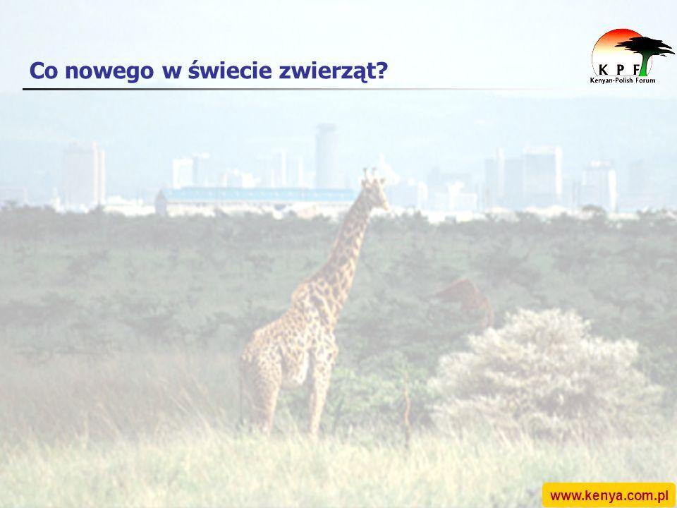 www.kenya.com.pl Co nowego w świecie zwierząt?