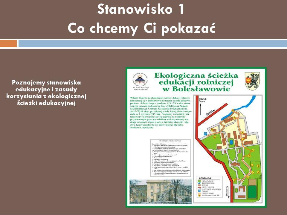 Stanowisko 2 Obserwujemy przekroje drzew iglastych i liściastych Drzewo jest Twoim przyjacielem Rozpoznajemy drzewa i krzewy w parku.