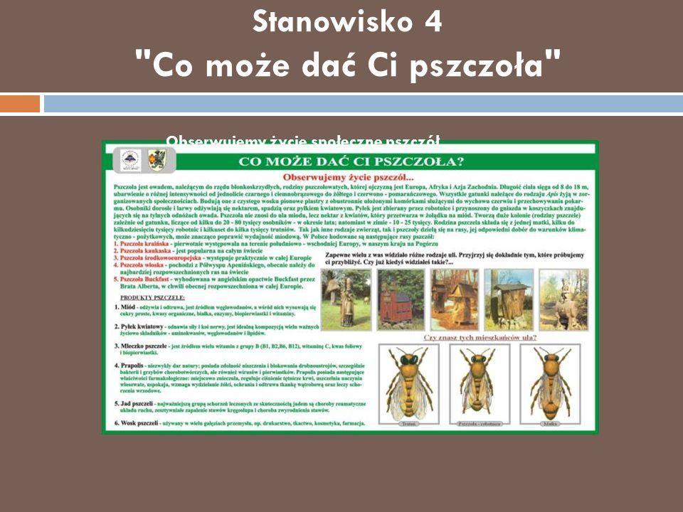 Izba dydaktyczno-muzealna W zgodzie z naturą Można tu obejrzeć m.in.