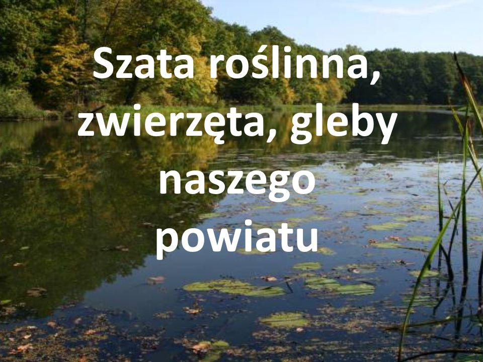 Kokorycz - rezerwat leśny o powierzchni 41,30, ha położony na terenie Leśnictwa Głębocko Nadleśnictwa Tułowice, w granicach gminy Grodków.