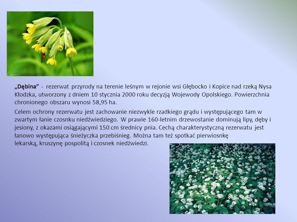 Dębina - rezerwat przyrody na terenie leśnym w rejonie wsi Głębocko i Kopice nad rzeką Nysa Kłodzka, utworzony z dniem 10 stycznia 2000 roku decyzją W