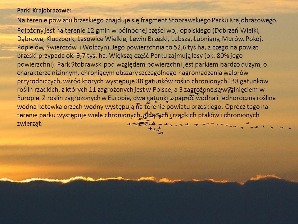 Parki Krajobrazowe: Na terenie powiatu brzeskiego znajduje się fragment Stobrawskiego Parku Krajobrazowego. Położony jest na terenie 12 gmin w północn