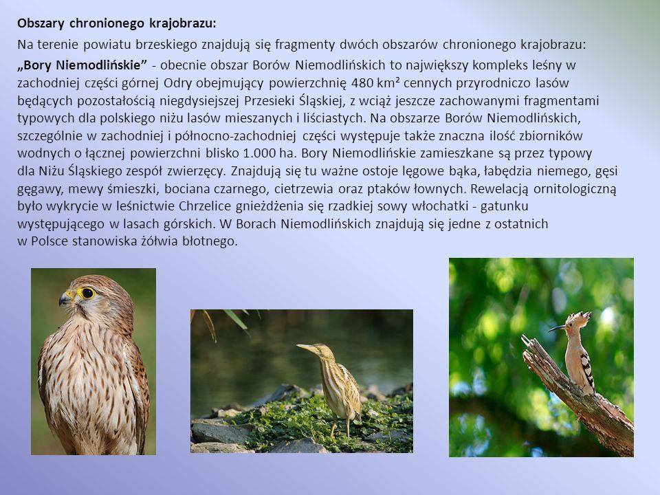 Obszary chronionego krajobrazu: Na terenie powiatu brzeskiego znajdują się fragmenty dwóch obszarów chronionego krajobrazu: Bory Niemodlińskie - obecn