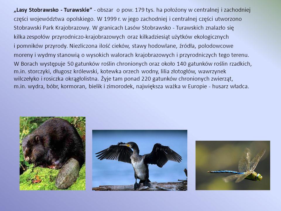 Lasy Stobrawsko - Turawskie - obszar o pow. 179 tys. ha położony w centralnej i zachodniej części województwa opolskiego. W 1999 r. w jego zachodniej