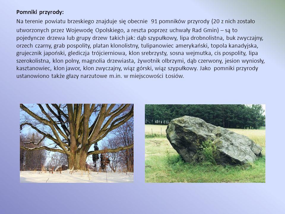 Pomniki przyrody: Na terenie powiatu brzeskiego znajduje się obecnie 91 pomników przyrody (20 z nich zostało utworzonych przez Wojewodę Opolskiego, a